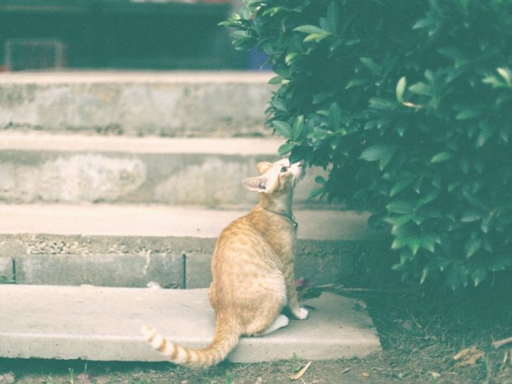What to do when your cat is lost