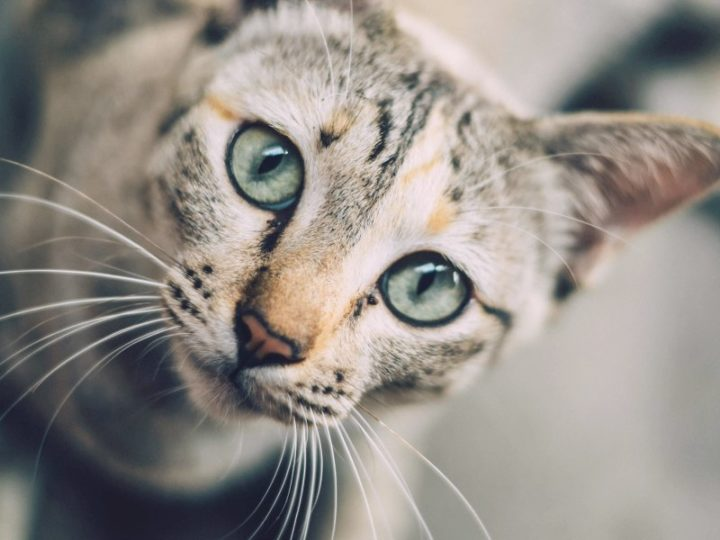 5 reasons why you should get your male cat neutered