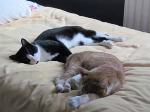 Sleepy Frankie & Marmaduke