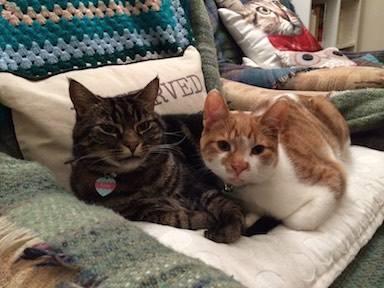 Lively Henry & Lola