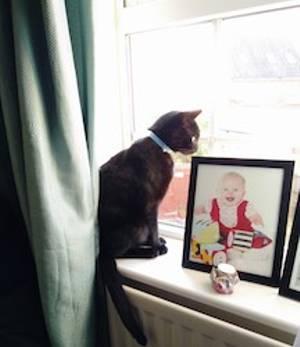 Window Watching Jingle