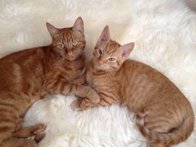 Cuddly Molly & Ron