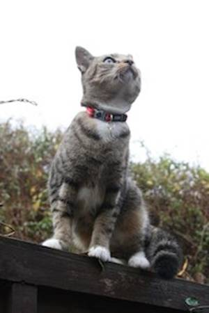 Curious Bramley
