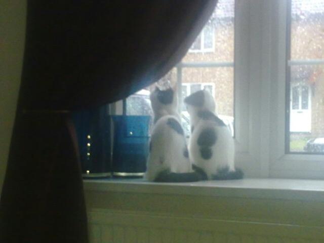 Freddie & Lola (were Poppy & Lilly)