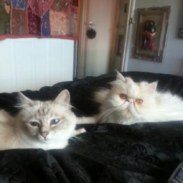 Gentle Sapphire & Quirky Jadora