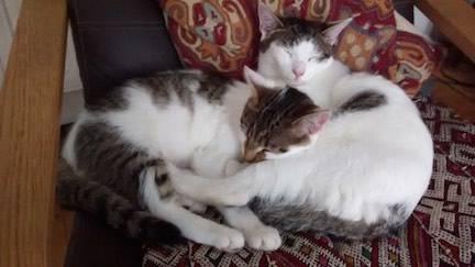 Loving Teddy & Tilly