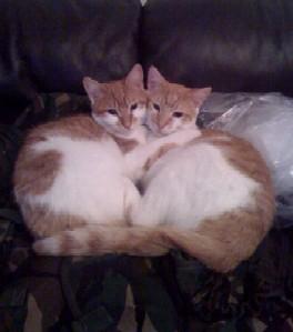 Bo & Buzzy B