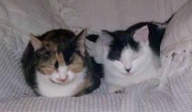 Chloe & Sasha