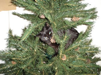 Marlon in the Christmas Tree