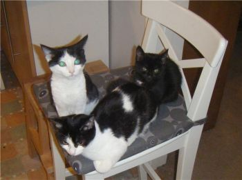 Millie, Melody & Saffy