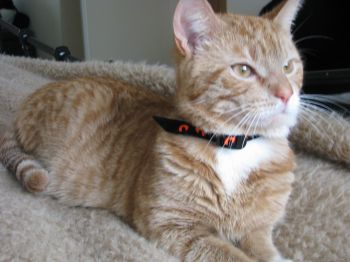 Happy Tail: Tigger Finds a New Family