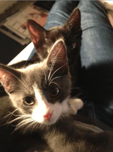 Benny & Sooz (were Eli & Eliza Thumbkittens)
