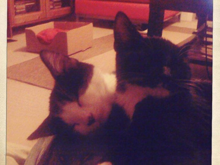 Jarvis & Arnold (were Liam & Edward)