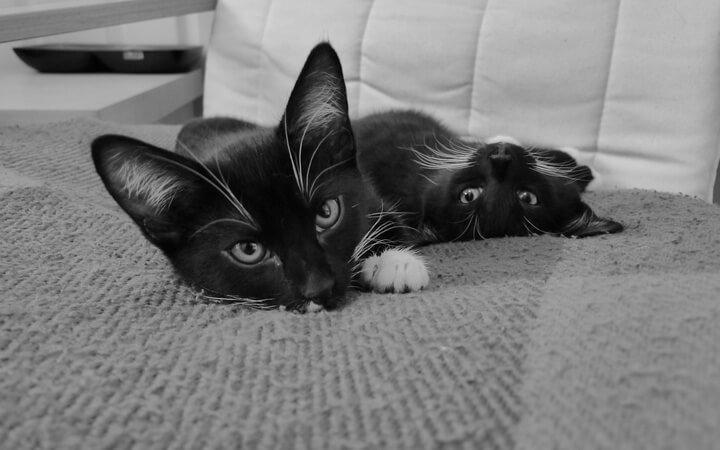 Fraggle & Rocky