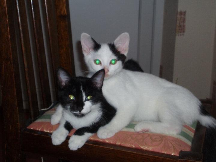 Darcy & Rico
