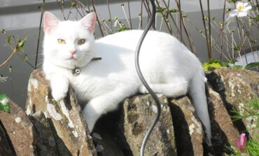 Bright White Charlie