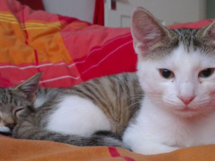 Festive-Loving Louis & Leo (were Roger & Romeo)