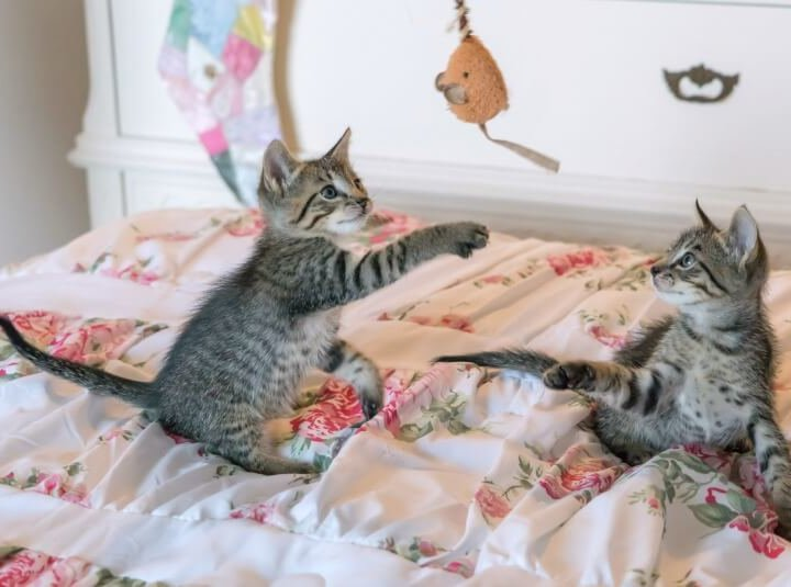 Why we rehome kittens in pairs