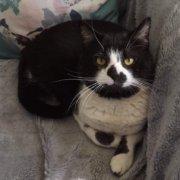 Rescue Cats Homes Bristol